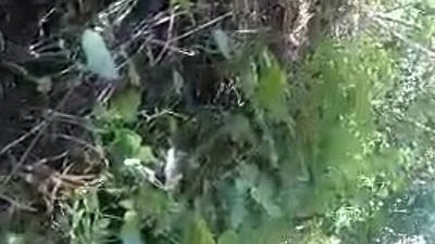 boyfriend  first time  fucking  horny girls  outdoor  young